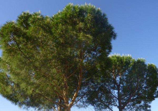 Trees and blue sky in the garden at Villa Roquette
