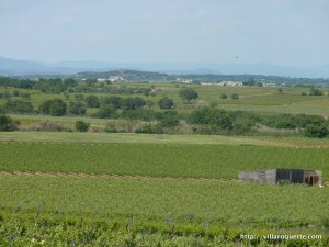 sud de france vineyards near montblanc languedoc