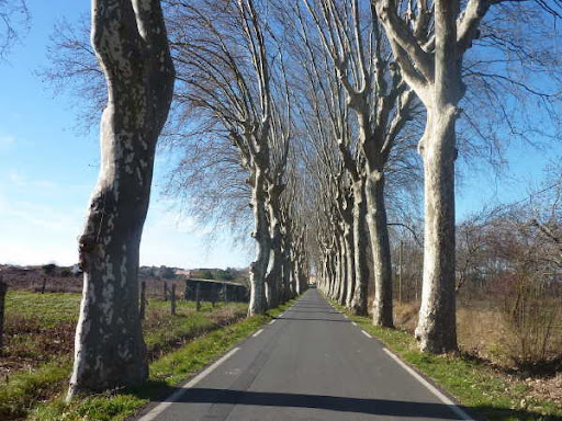 Autumn in Languedoc is vibrant and beautiful, this avenue of plane tree is typical of village roads in languedoc and is near the Villa Roquette B&B in the South of France