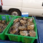 montblanc_market_oysters.600