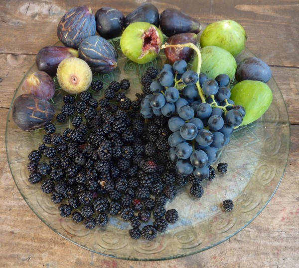 Local Fruit from the Fields around Villa Roquette